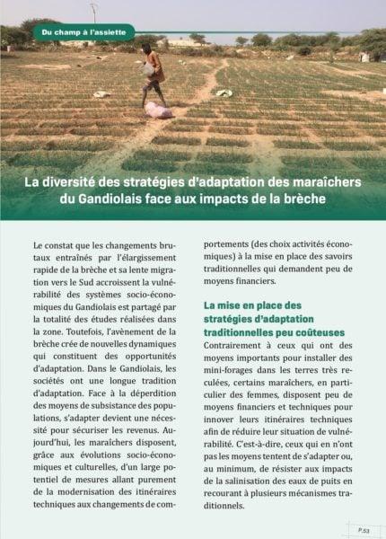 Stratégies d'adaptation des maraîchers du Gandiolais face aux impacts de la brèche.